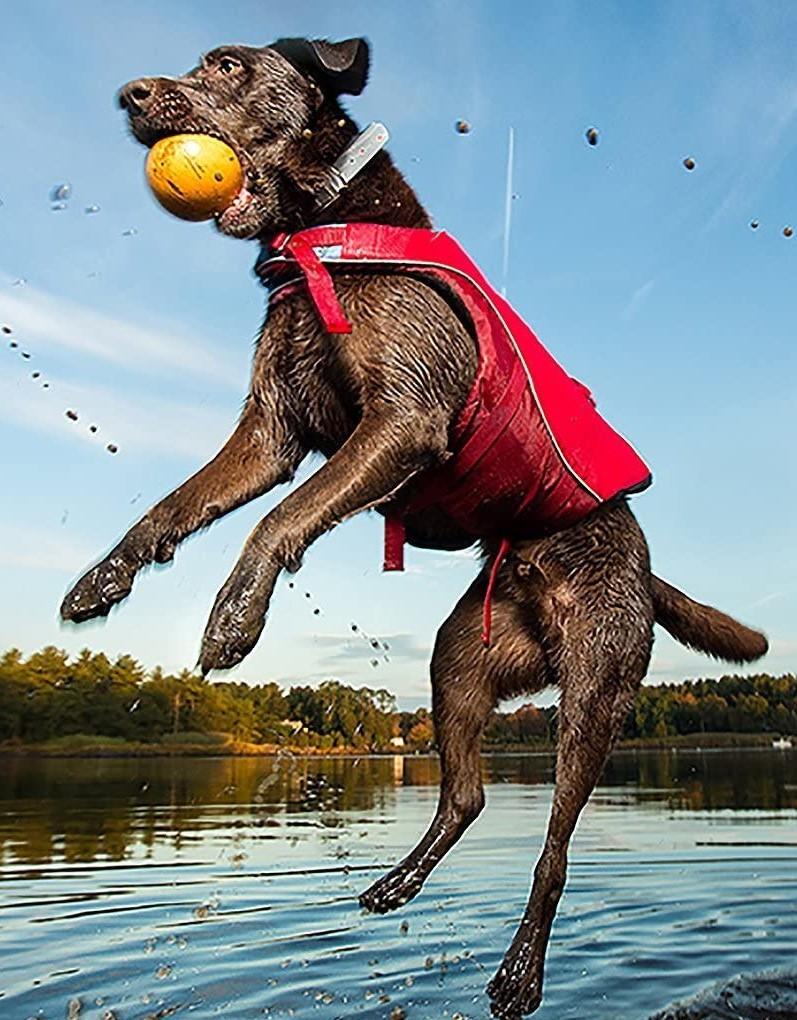 Kurgo Surf n' Turf Dog Life Jacket | Lifejacket for Dogs